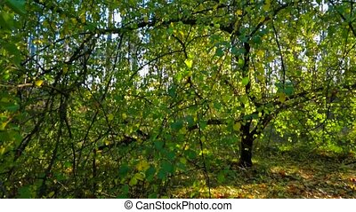 Green Tree In Autumnal Landscape Against Bright Sunlight -...
