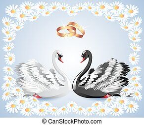 Elegant white and black swans with wedding rings and floral...