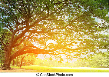 big tree with branches with burst light