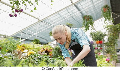 Female florist dusts off her hands after exploring plant at...
