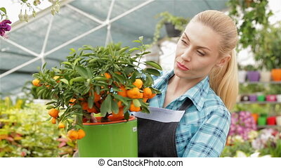 Female florist looking at mandarin fruits at the garden...