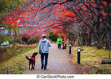 walk with best friend dog - Old man walk with black golden...