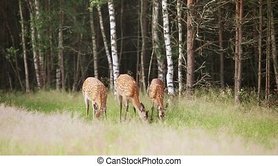 A herd of dappled deer grazing on the edge of the forest...