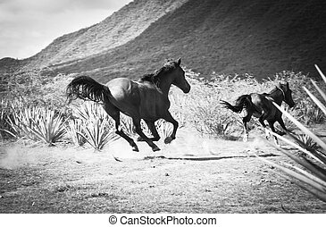 Running horse - Horses running in a Tequila landscape with...