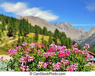 Mountains, Blomstrar
