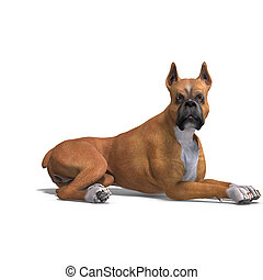 German Boxer Dog. 3D rendering with clipping path and shadow...