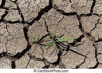 grass on dry cracked soil