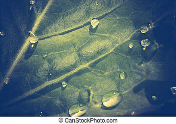 Cabbage with Waterdrops - Fresh green cabbage leaves with...