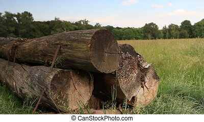 stack of trunks in field