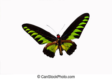 Butterfly - Isolated on white colorful butterfly with its...