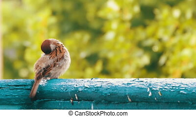 Sparrow Sitting on the Railing of the Balcony