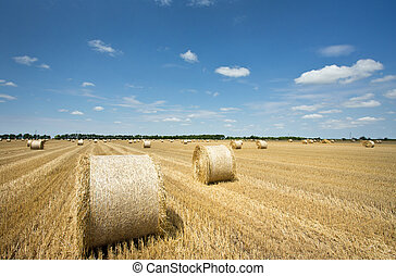 rolled bales on field - Rural landscape with many rolled...