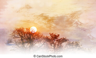 Amazing nature sky and tree top view with morning sunrise on colourful puffy clouds wide sky with blank space area for backgroud, wonderful dreamy scenery nature sunshine fresh happy morning view