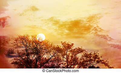 Amazing nature sky and tree top view with sunet on colourful puffy clouds wide sky with blank space area for backgroud, wonderful dreamy scenery nature twilight and sunset view