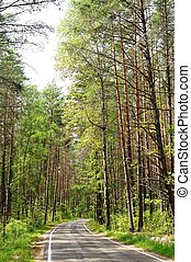 Empty rural road curve at pine forest vertical