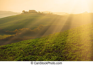 Green fields in Tuscany, Italy, at sunrise, natural sunny...