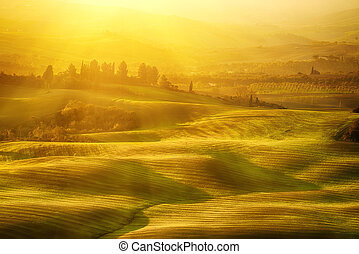 Wavy fields in Tuscany at sunrise, Italy. Natural outdoor...