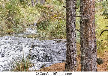 Cajas National Park Cuenca Ecuador - Trees and stream nature...
