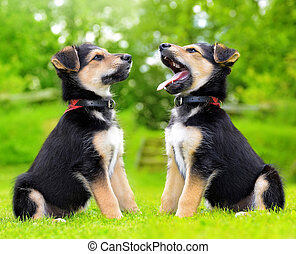 Cute puppy crossbreed dogs in grass.