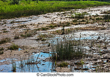 tufts of grass and mire on the swamp - tufts of grass and...