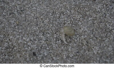 Little crab on a beach close up