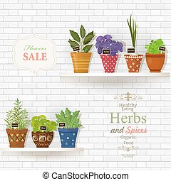 herbs and spices planted in cute ceramic pots for sale on white