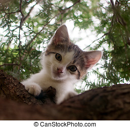 small kitten is sitting and relaxing on a big tree