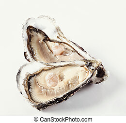 Oyster - Seafood. Delicious oyster on a white background