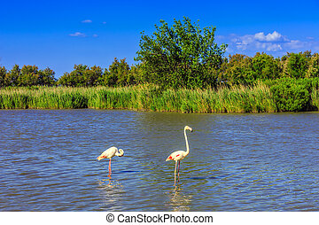 A pair of pink flamingos roost Evening light in the National...
