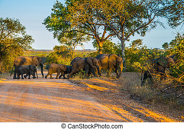 Herd of elephants becomes a dirt road