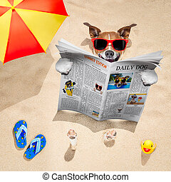 dog at the beach reads newspaper - jack russell dog buried...