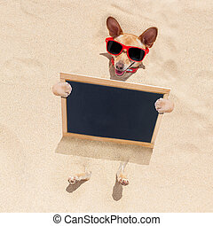 dog at the beach and banner - chihuahua dog buried in the...