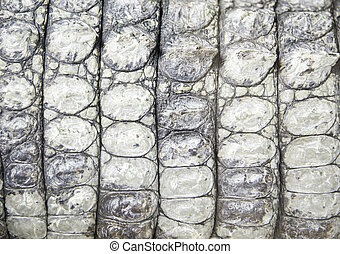 real crocodile skin of living animal closeup