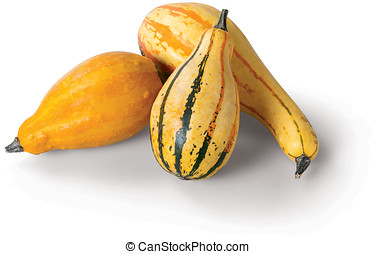 Yellow Squash on white background - Yellow Squash on the...