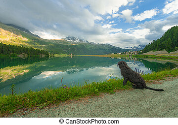 dog looks a boat in the mountain lake of Sils in Engadin...