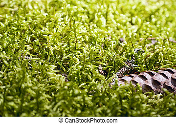 Green moss background - Green moss Sphagnum background and...