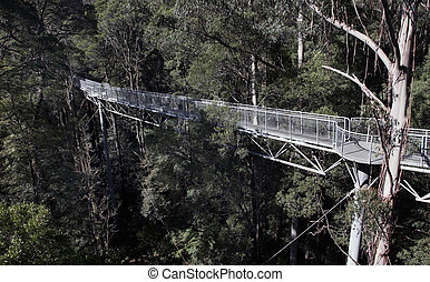 Tree Top Walk - Otway Fly, Tree Top Walk