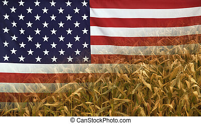 USA Nutrition Concept Corn field with fabric Flag -...
