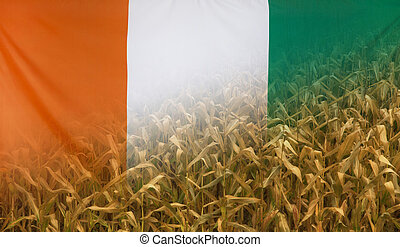 Ivory Coast Nutrition Concept Corn field with fabric Flag -...