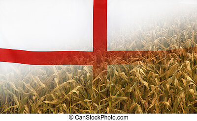 England Nutrition Concept Corn field with fabric Flag -...