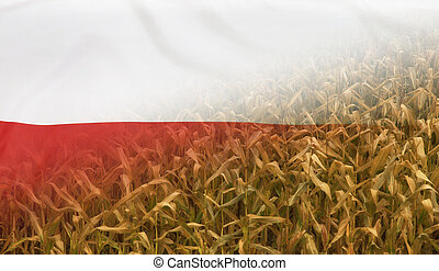Poland Nutrition Concept Corn field with fabric Flag -...