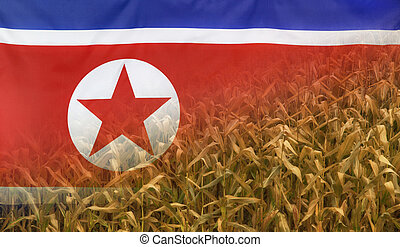 North Korea Nutrition Concept Corn field with fabric Flag -...