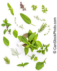 Various fresh herbs from the garden holy basil , basil...