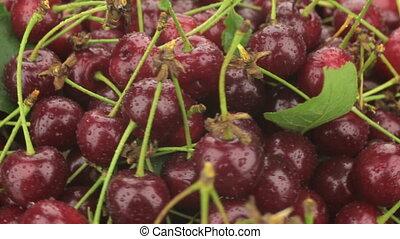 Pile of fresh, ripe, juicy berries cherry whirl. Red cherry...