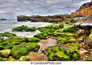 vibrant coastal vista - rock covered in green algae...