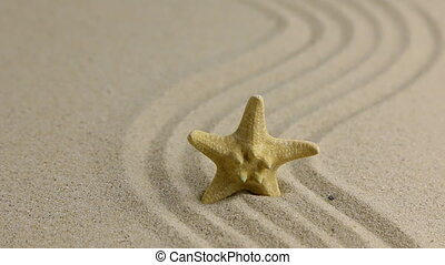 Removing starfish sticking out of the sand on the beach,...