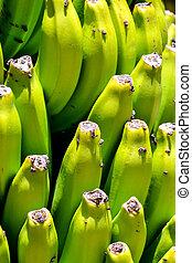 Banana Plantation Field in the Canary Islands