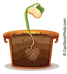 Seed germination in clay pot