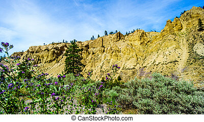 Hoodoos and Wildflowers along the Nicola River and Highway 8...