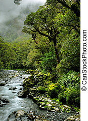 lush rainforest and river landscape in new zealand